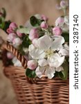 Delicate apple-tree flowers on a beige background. Low saturation. - stock photo