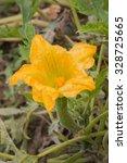 Blossom Flower Of Organic...