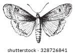 moth  vintage engraved... | Shutterstock .eps vector #328726841
