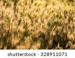 dry grass  | Shutterstock . vector #328911071