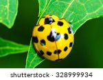 close up of yellow ladybird... | Shutterstock . vector #328999934