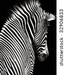 A Black And White Zebra Image...
