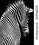 A Black And White Zebra Image...
