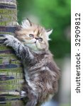 Stock photo the kitten play at the outdoor 32909812