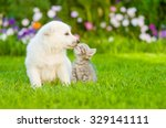 Stock photo white swiss shepherd s puppy kissing kitten on green grass 329141111