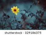 yellow meadow flowers. flowers... | Shutterstock . vector #329186375