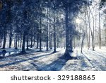 Landscape In A Forest In The...