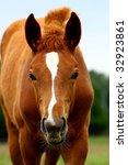 horse face | Shutterstock . vector #32923861