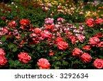 Stock photo rose garden 3292634