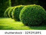 Park With Shrubs And Green...
