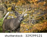 Close Up Image In Autumn  Of A...