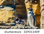 Two Humboldt Penguins Accompan...