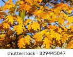 oak tree branches with autumn... | Shutterstock . vector #329445047