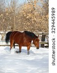 Small photo of German warmblood horse galloping in the winter paddock