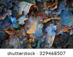 Frozen oak leafs   abstract...