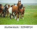 Horses Running - stock photo
