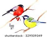 watercolor birds set  bullfinch ... | Shutterstock . vector #329509349