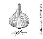 garlic. hand drawn garlic bulb... | Shutterstock .eps vector #329530559