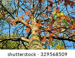 Rowan Tree With Colored Red...