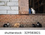 Many Stray Cats Against A Bric...
