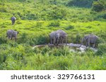 thai elephant in nature of kui... | Shutterstock . vector #329766131
