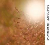 abstract grass at sunset | Shutterstock . vector #329805491