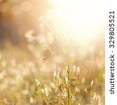 abstract grass at sunset | Shutterstock . vector #329805521