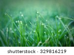 Green Grass With Waterdrop