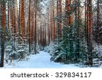 pine forest  winter | Shutterstock . vector #329834117