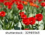 field of beautiful red tulips... | Shutterstock . vector #32985565