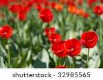 field of beautiful red tulips... | Shutterstock . vector #32985565
