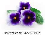 Beautiful Pansy Flowers...