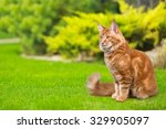 Stock photo cat 329905097