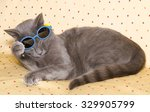 Stock photo studio portrait of funny chartreux cat with summer sunglasses 329905799