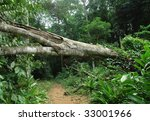 Fallen Tree In Tropical Forest