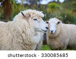 close up face of new zealand... | Shutterstock . vector #330085685