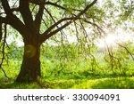spring meadow with big tree... | Shutterstock . vector #330094091