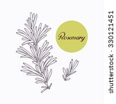Hand drawn rosemary branch with leaves isolated on white. Hand drawn spicy herbs. Doodle cooking ingredient for design. Hand drawn seasoning. Vector illustration