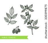 rubus idaeus   siberian herbs.... | Shutterstock .eps vector #330399875