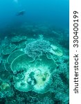 Small photo of Corals on a reef in Indonesia are beginning to bleach. Coral bleaching occurs when intracellular endosymbionts (zooxanthellae) are lost due to high sea temperatures or other environmental conditions.