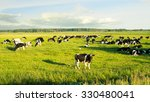 Herd Of Cows Grazing And...