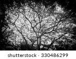 Whole Black Tree