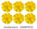 Yellow Flower By Isolate Style