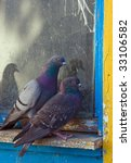 gray pigeons   Shutterstock . vector #33106582