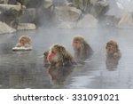 snow monkeys in spring at... | Shutterstock . vector #331091021