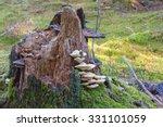 White Polypore Mushrooms...