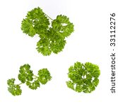 parsley | Shutterstock . vector #33112276