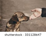 Stock photo helping child hand and lonely street dog with sad eyes theme of social problem of homeless animals 331128647