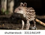 Small Stripped Baby Of The...