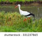 stork in a field | Shutterstock . vector #331237865
